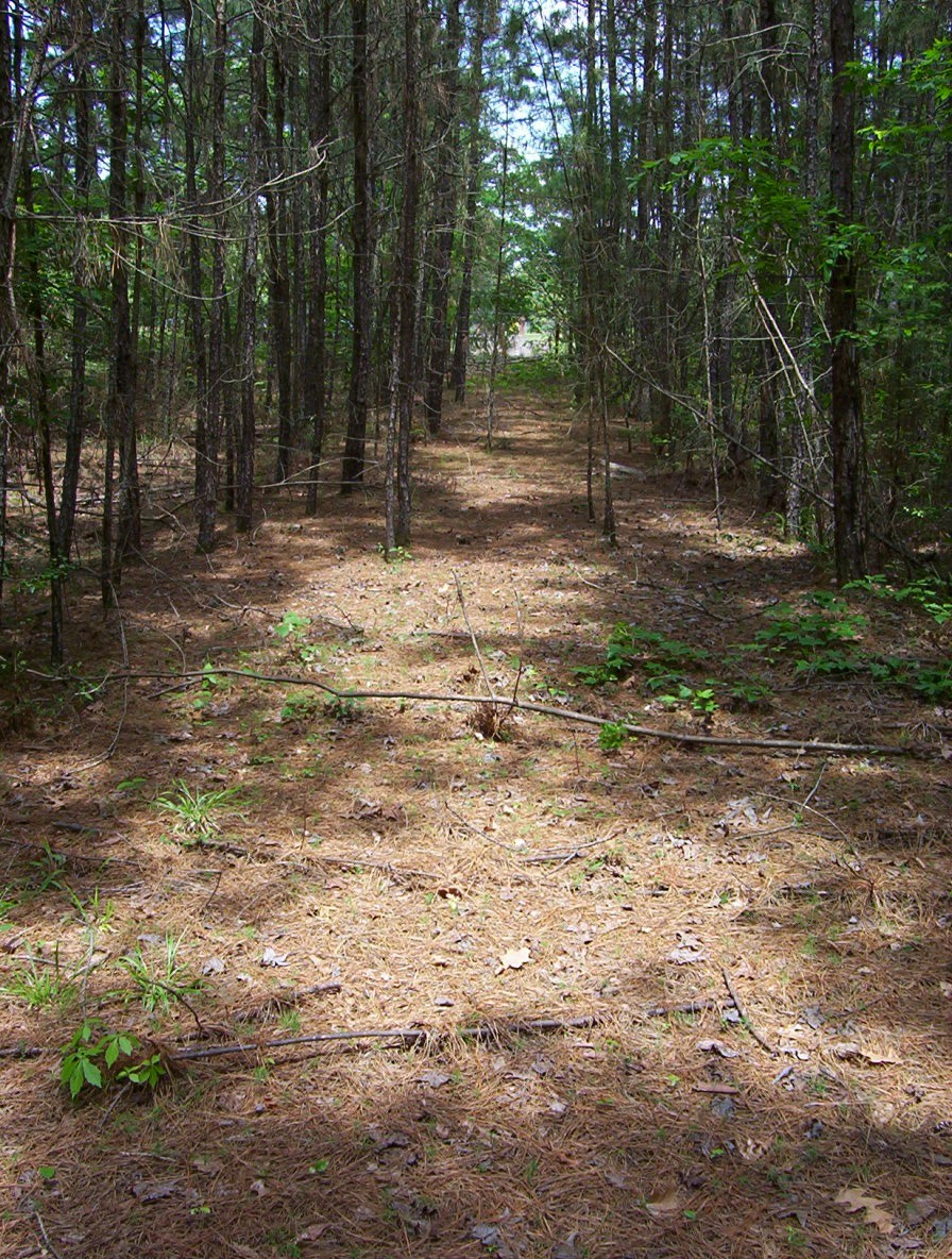 - Remains of old county line road along route of Trammel's Trace that had to be relocated when the lake was built. This is looking south from Martin Cemetery. Photo by Gary Pinkerton.