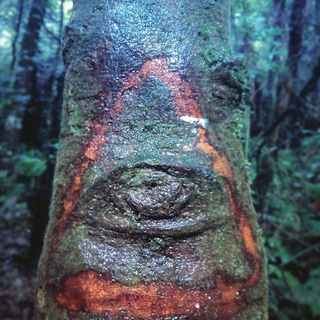 See.Eye.Tree
