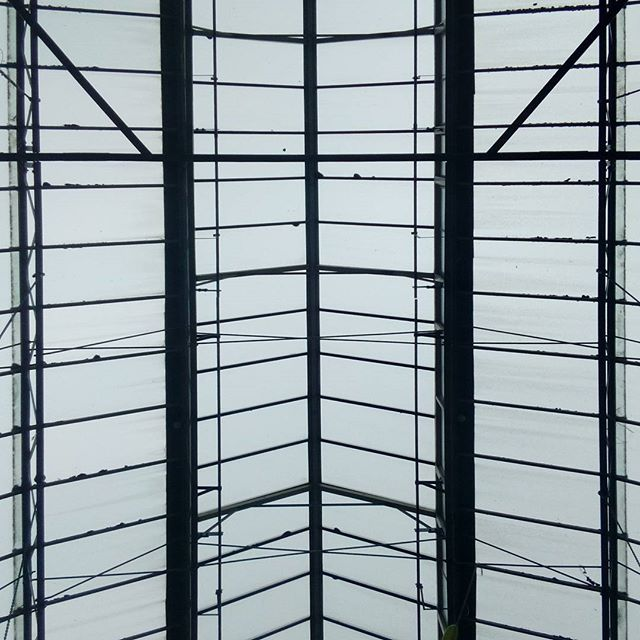 The only acceptable glass ceiling. #auckland #equality #greenhouse