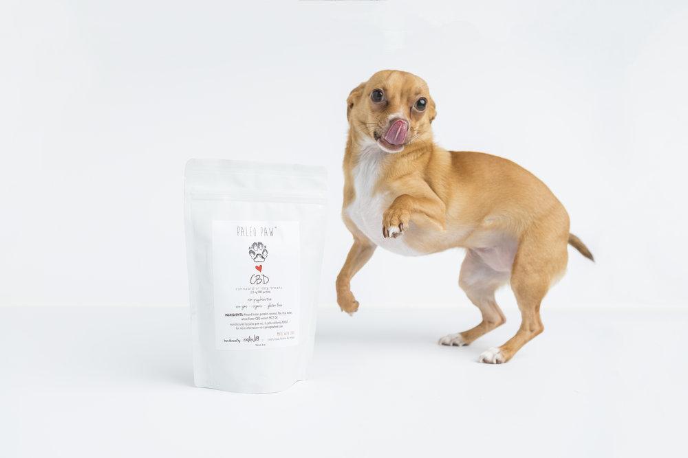 cbd-treat-dog-cat-spino-photo