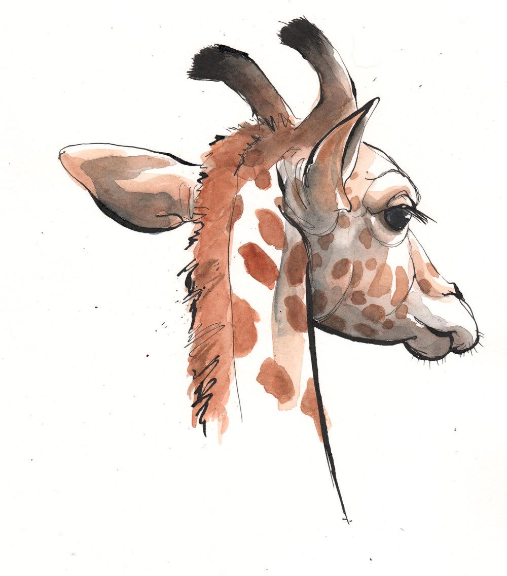 Giraffe-for-website.jpg