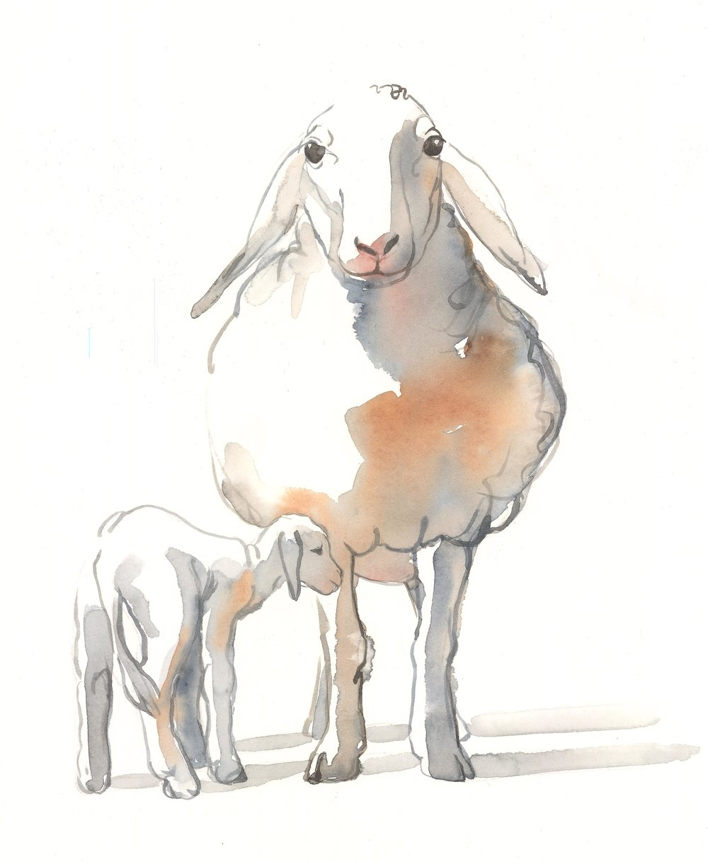 sheeps for website nov28.jpg