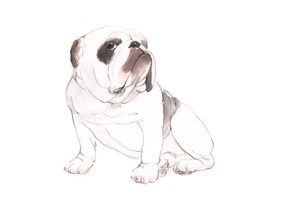 bulldog april 26 line.jpg