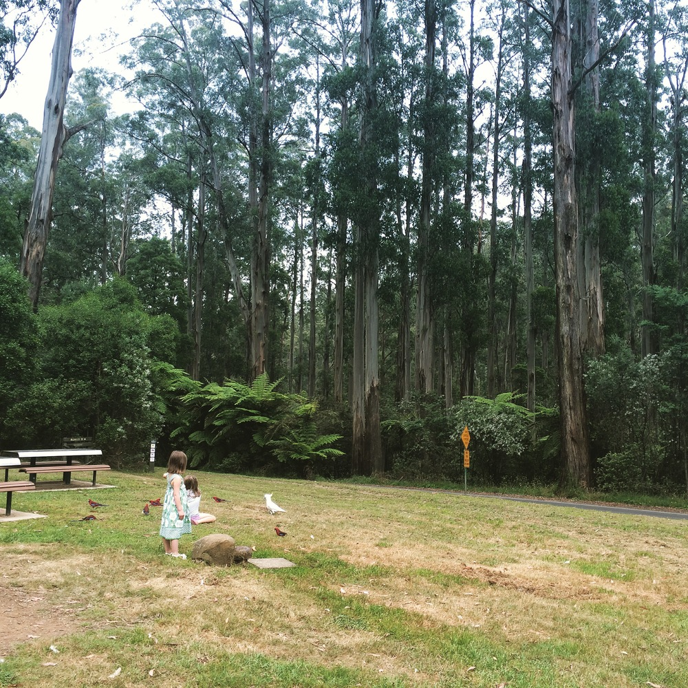 Feeding the Rosellas at Grant's Picnic Ground