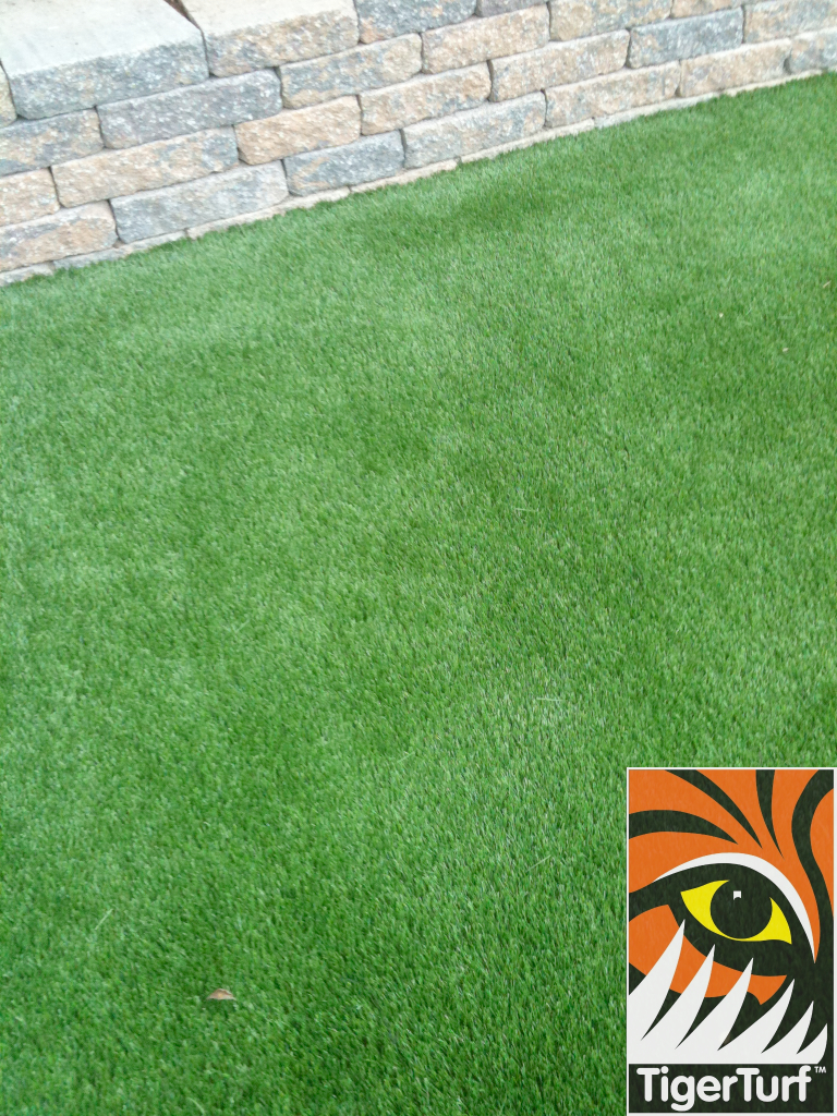 close up of new grass