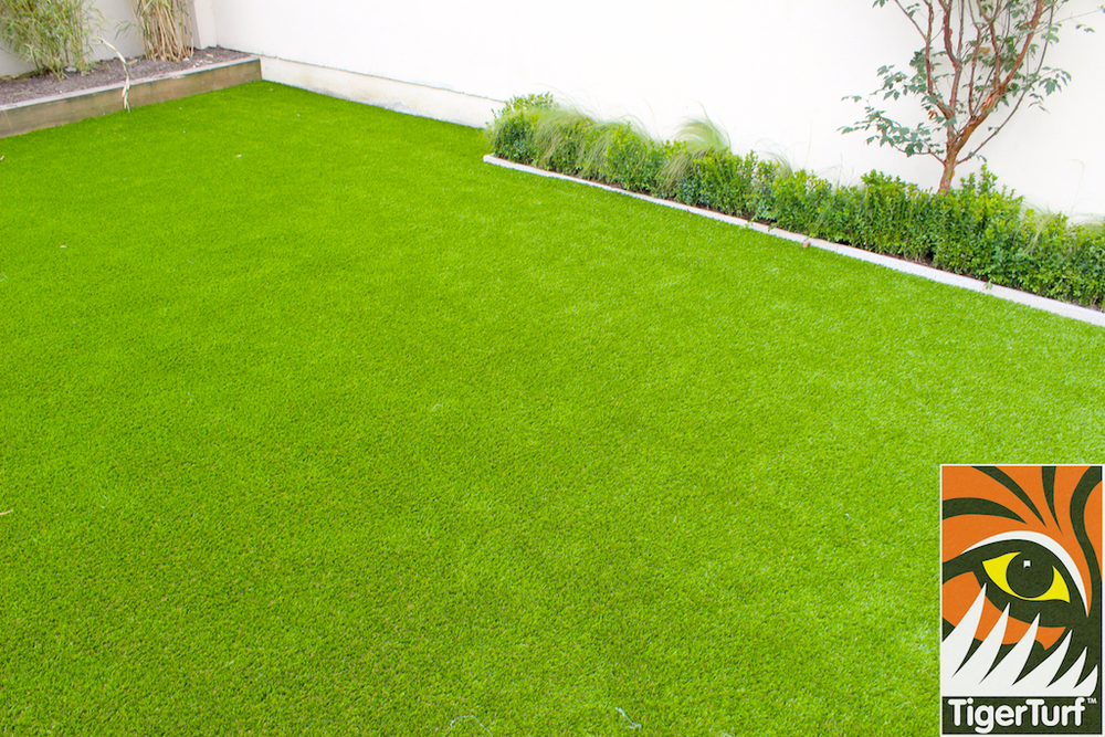 Artificial Grass and maple tree
