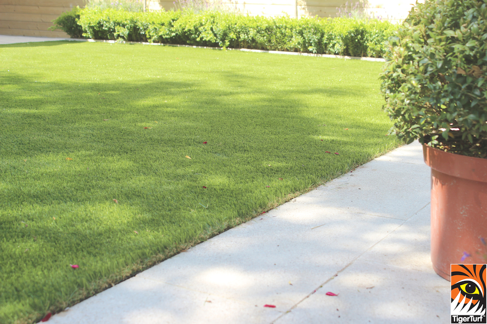 buxus and TigerTurf Lawn