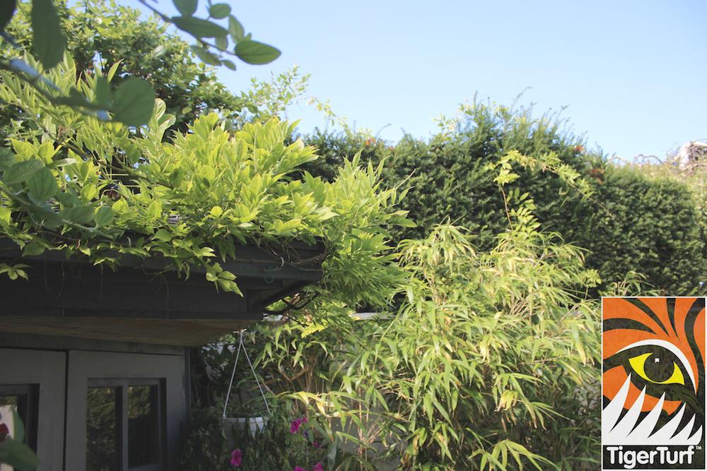 TigerTurf Garden landscape