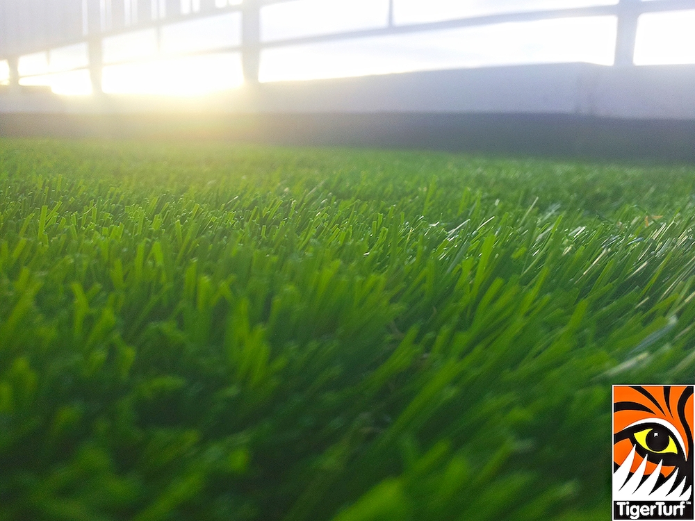 close up of TigerTurf lawn
