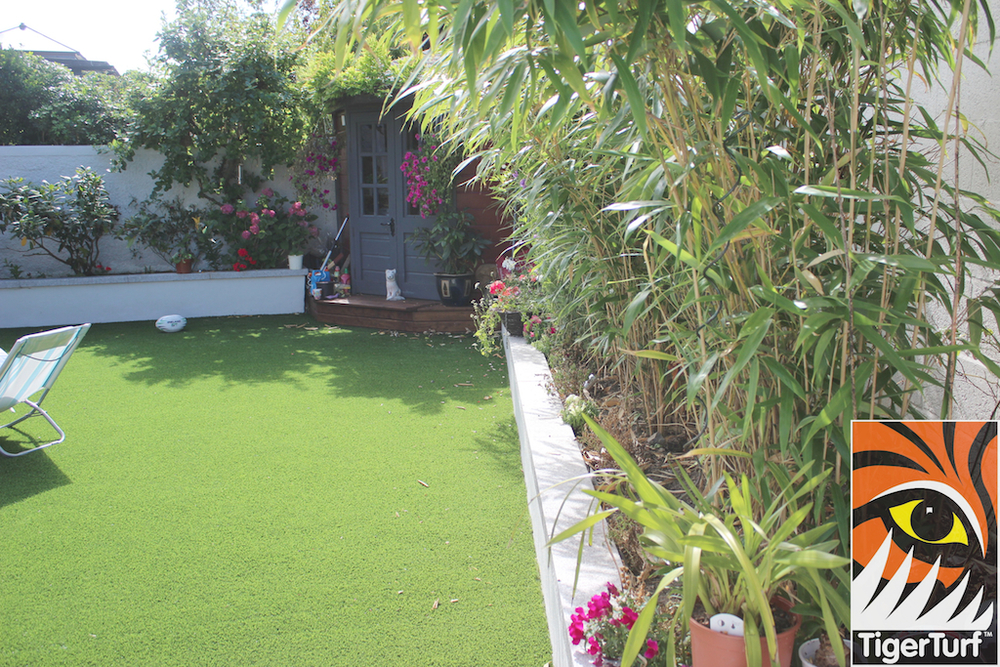 Bamboo and lawn
