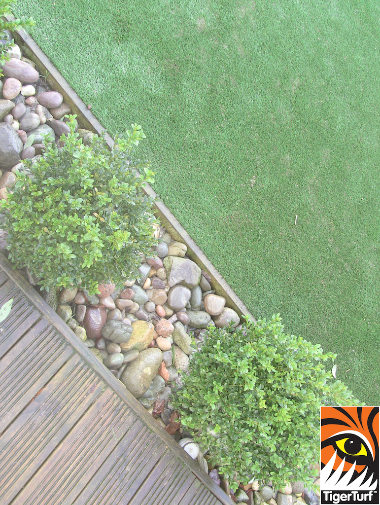 buxus balls and lawn turf