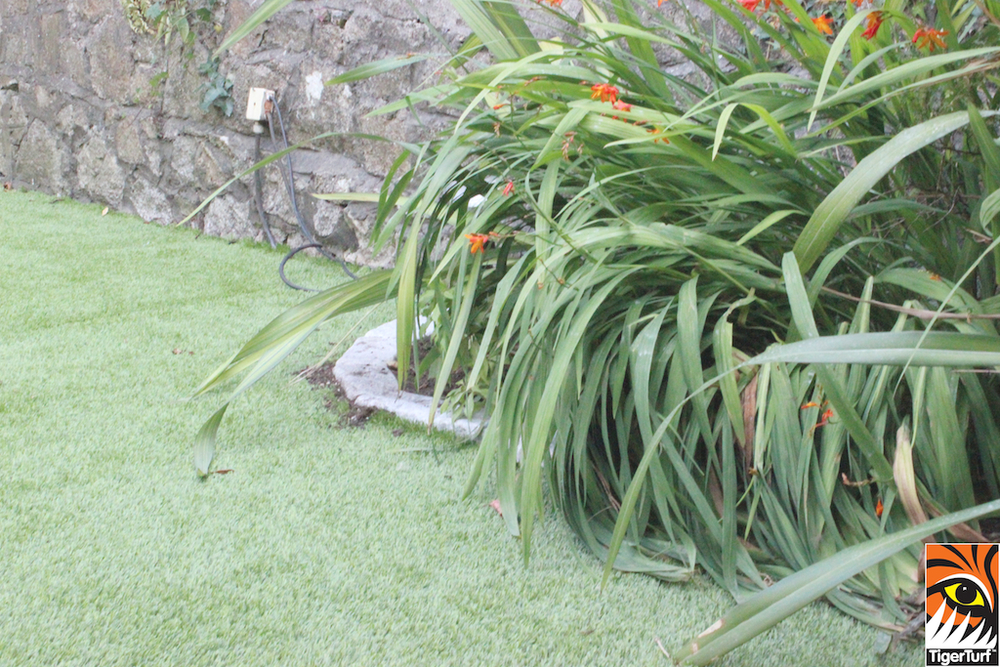 TigerTurf artificial grass and shrubs