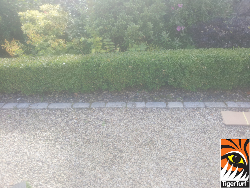 buxus bed edging in driveway
