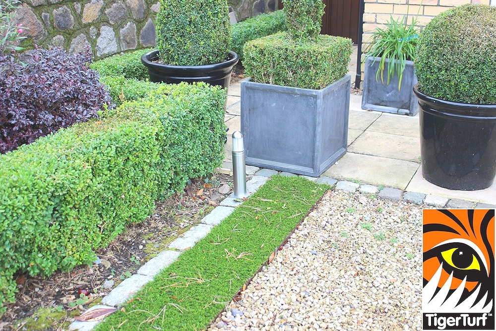 TigerTurf and Buxus
