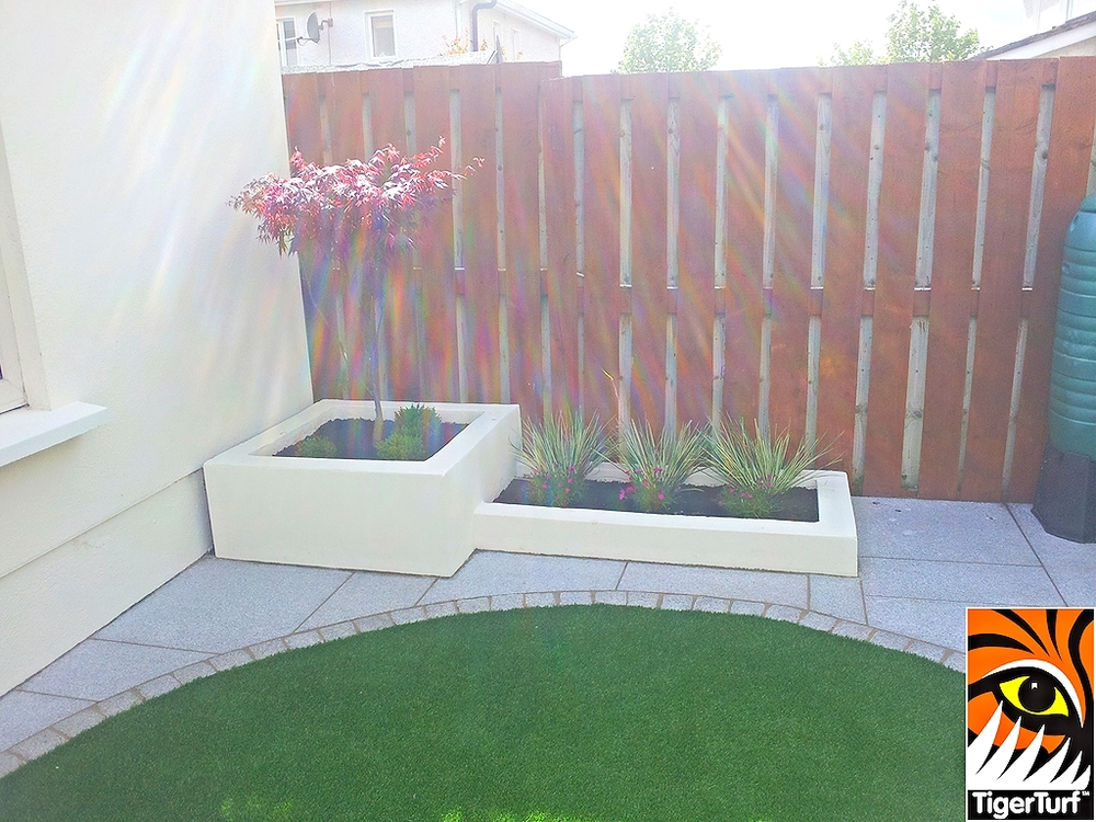 synthetic lawn and Maple tree