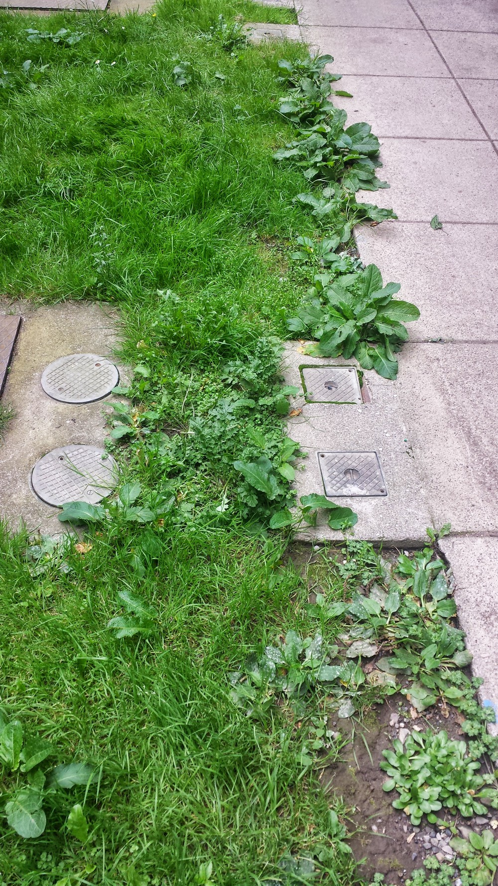 patchy old lawn
