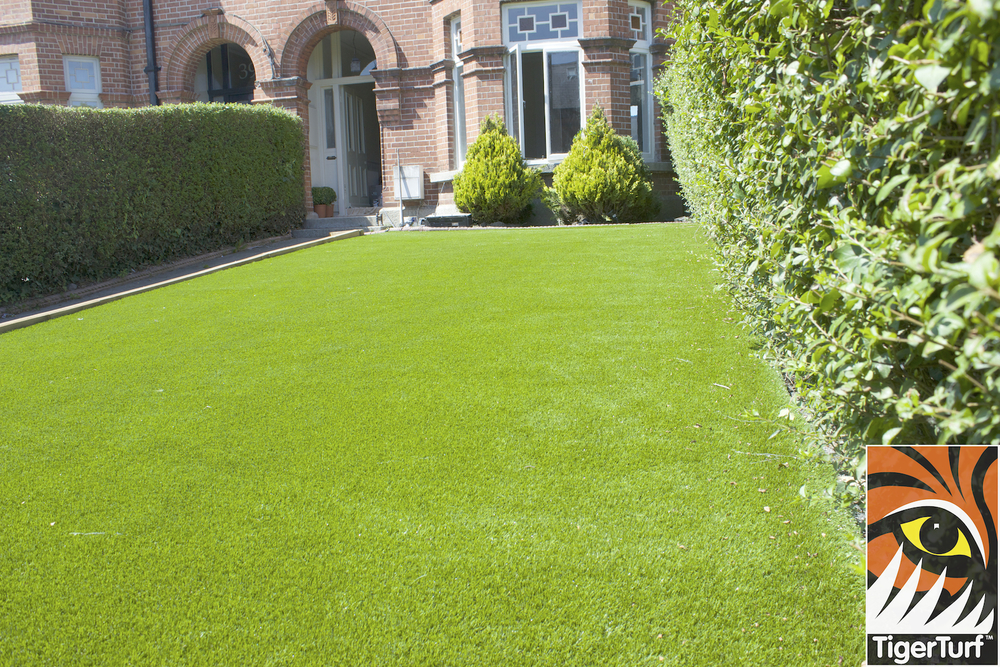 nice new grass