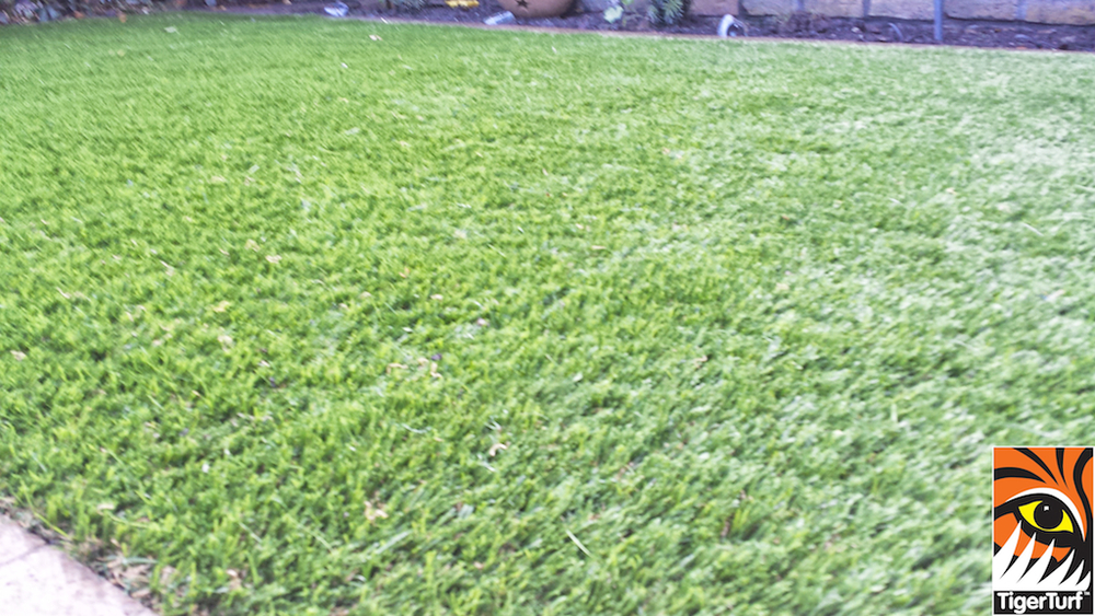Synthetic grass in front lawn 8.jpg