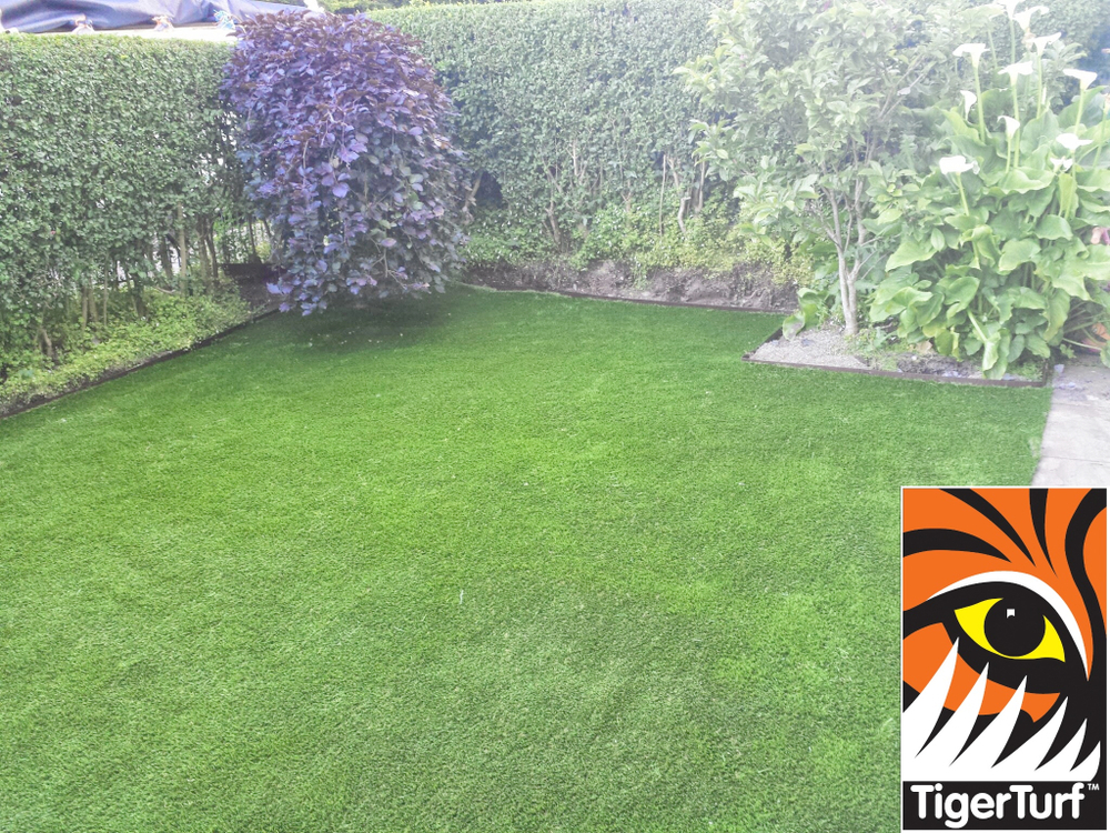 Synthetic grass in front lawn 11.jpg