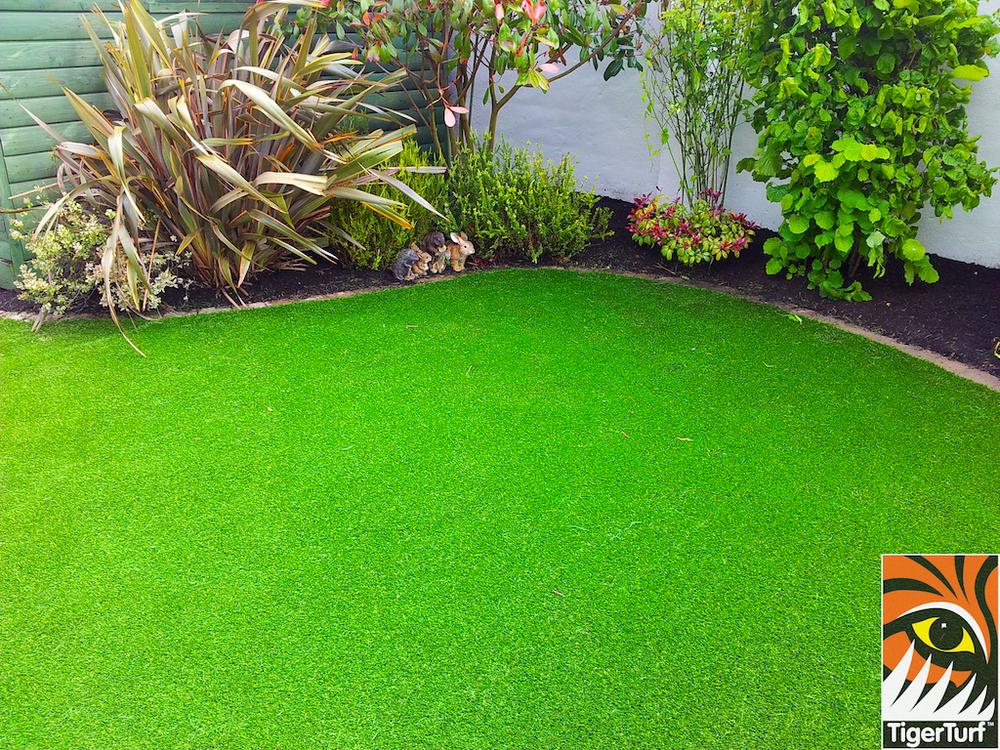tigerturf lawn turf 841.jpg