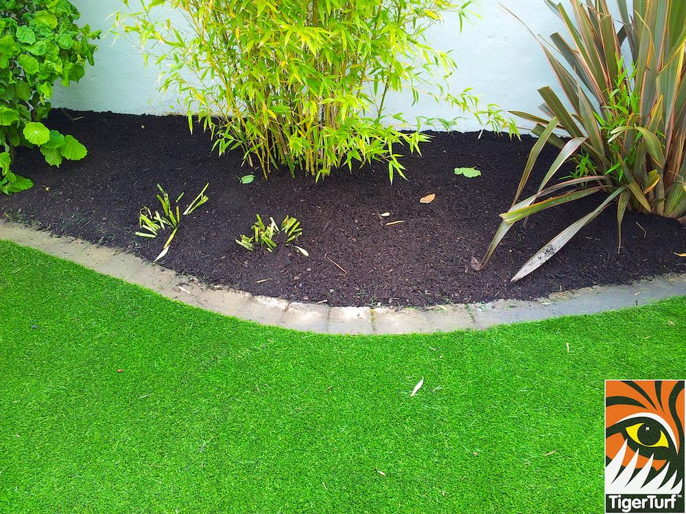 tigerturf lawn turf 844.jpg