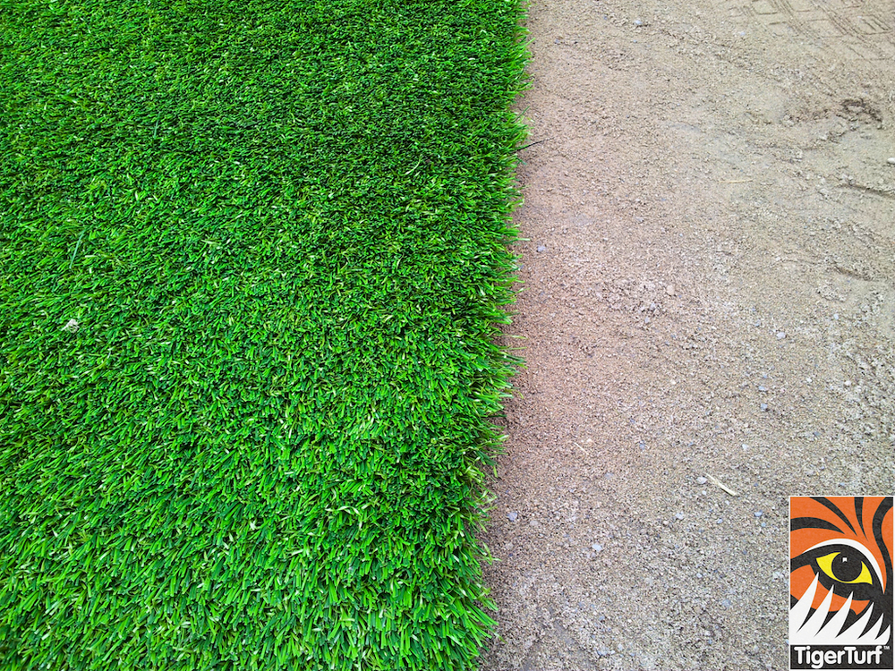 edge of lawn turf