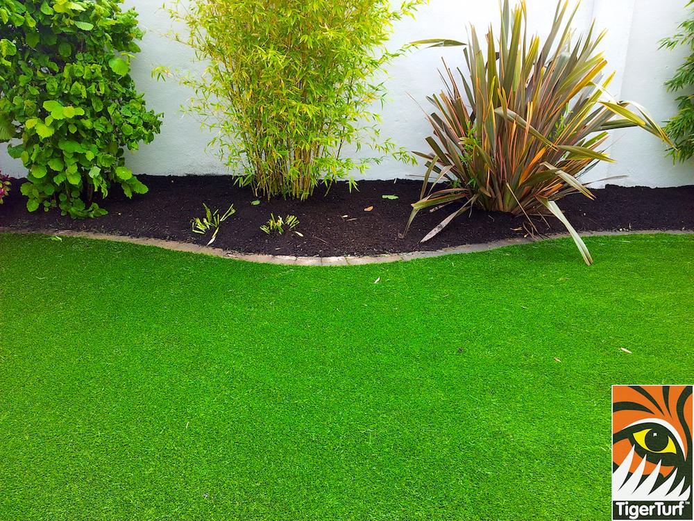 tigerturf lawn turf 842.jpg