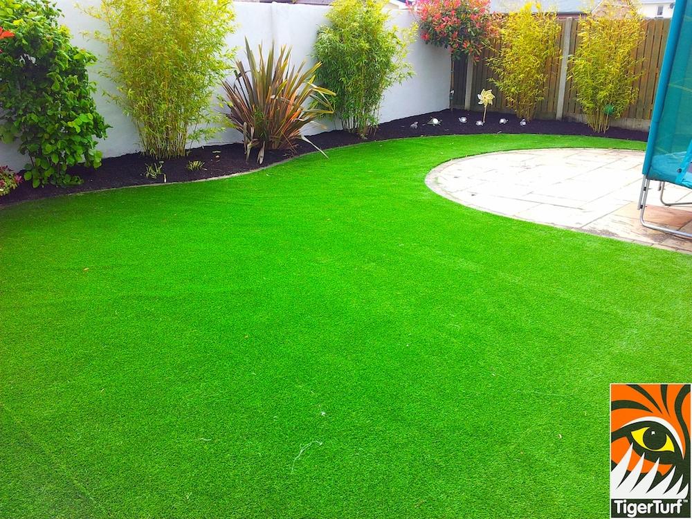 tigerturf lawn turf 839.jpg