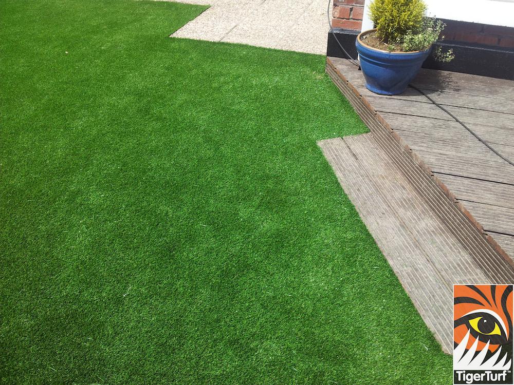 tigerturf lawn turf 812.jpg