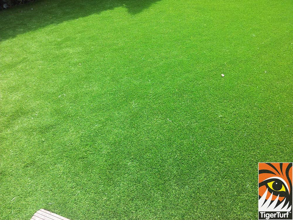 tigerturf lawn turf 814.jpg