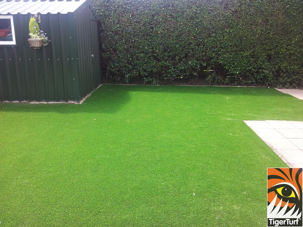 tigerturf lawn turf 816.jpg