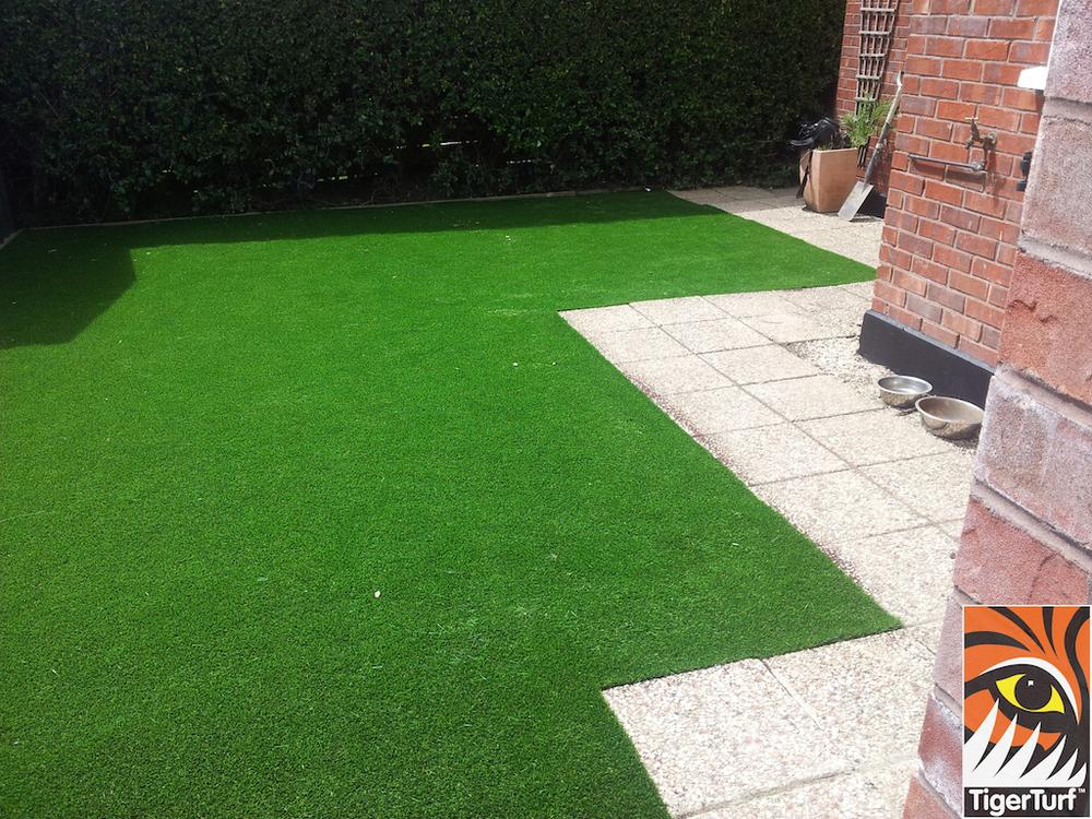 tigerturf lawn turf 817.jpg