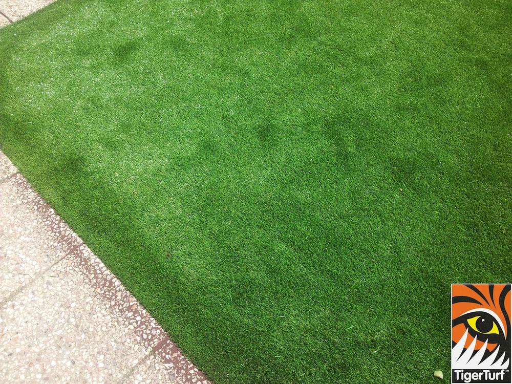 tigerturf lawn turf 800.jpg