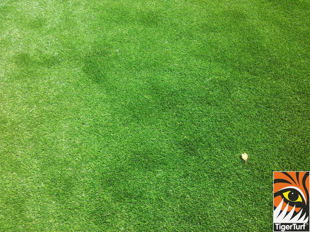 tigerturf lawn turf 801.jpg