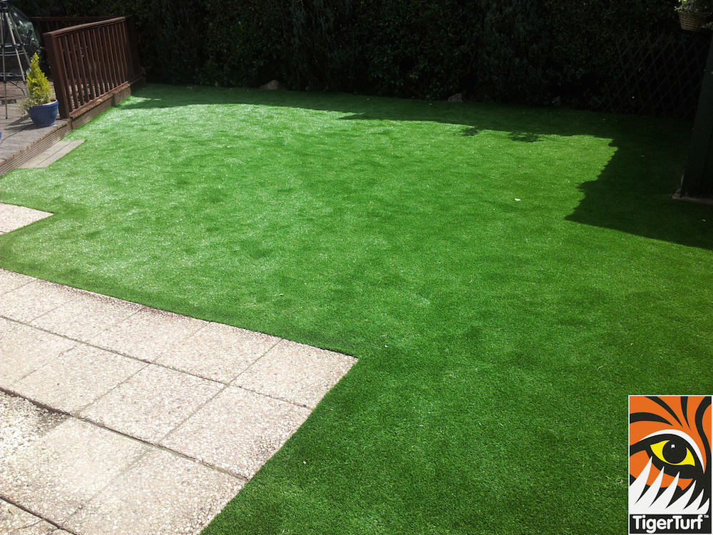 tigerturf lawn turf 806.jpg