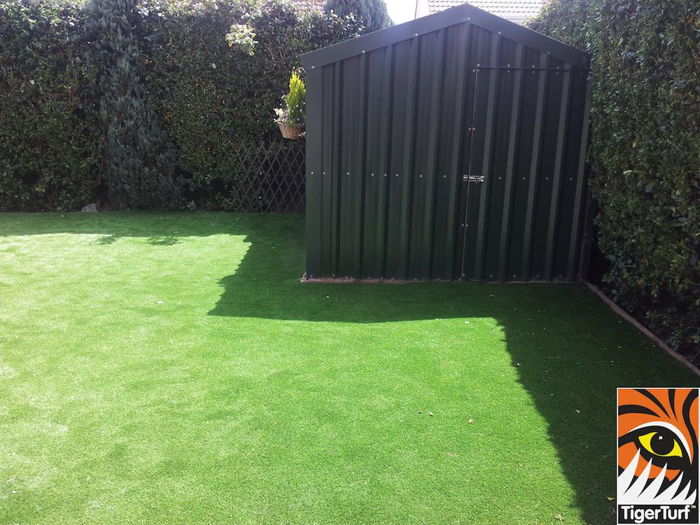 tigerturf lawn turf 807.jpg