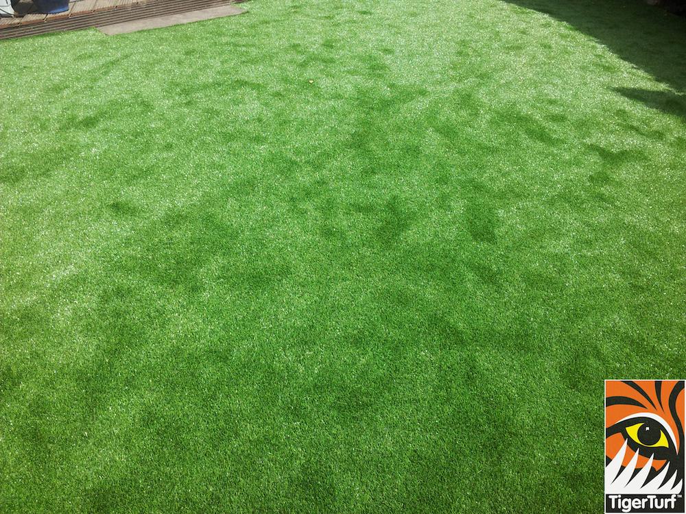 tigerturf lawn turf 809.jpg