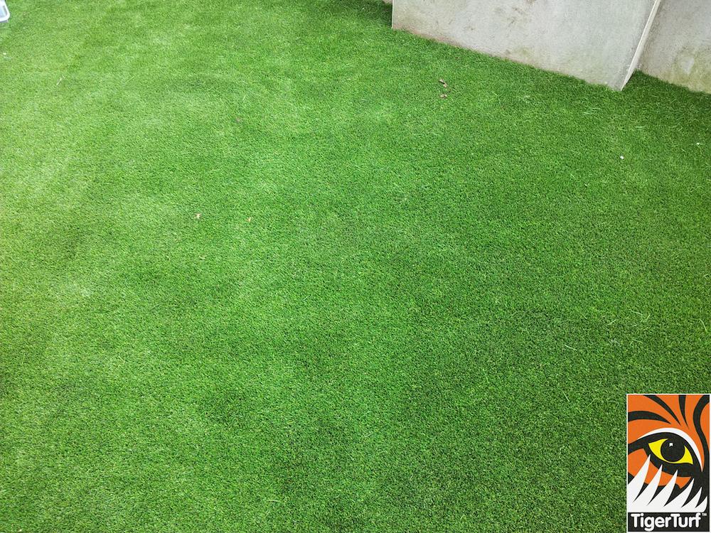 tigerturf lawn turf 819.jpg