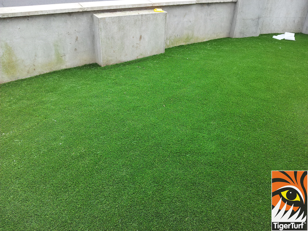 evergreen lawn