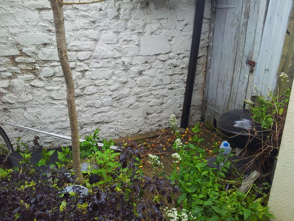 Dublin City Garden