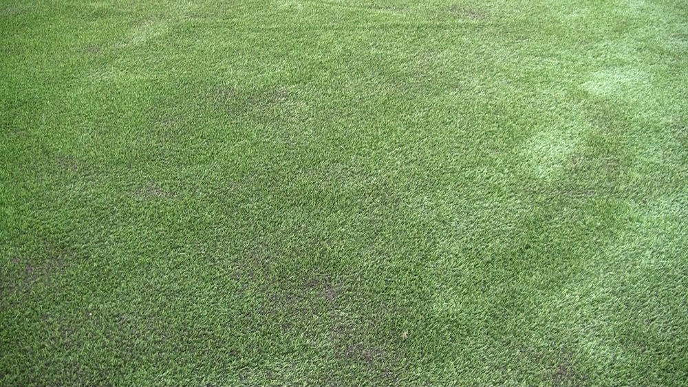Synthetic Garden Grass