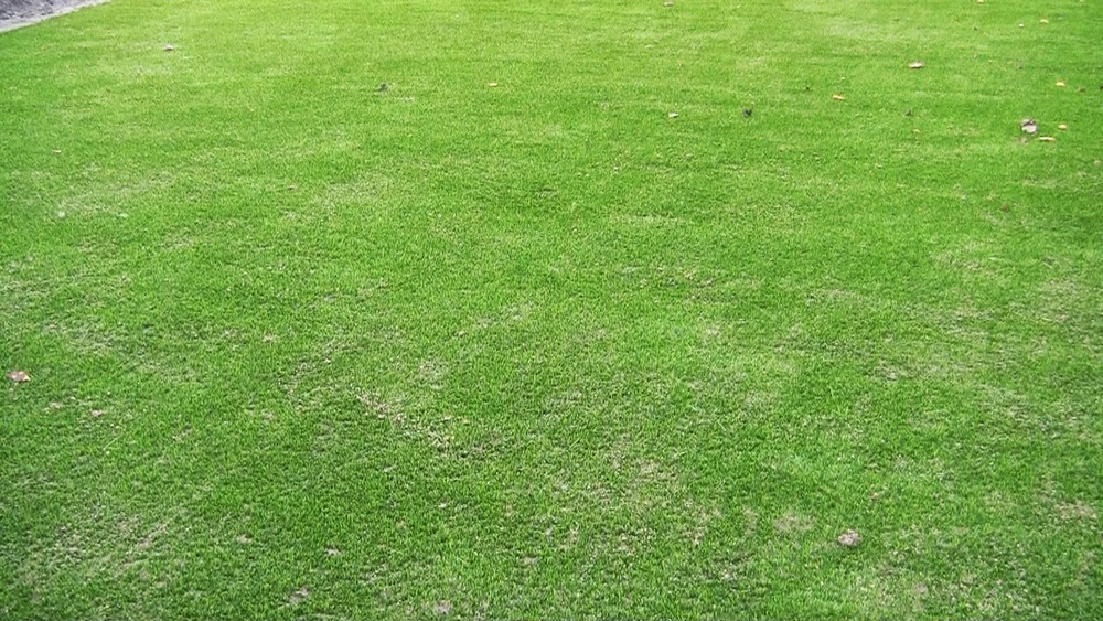 synthetic garden lawn turf