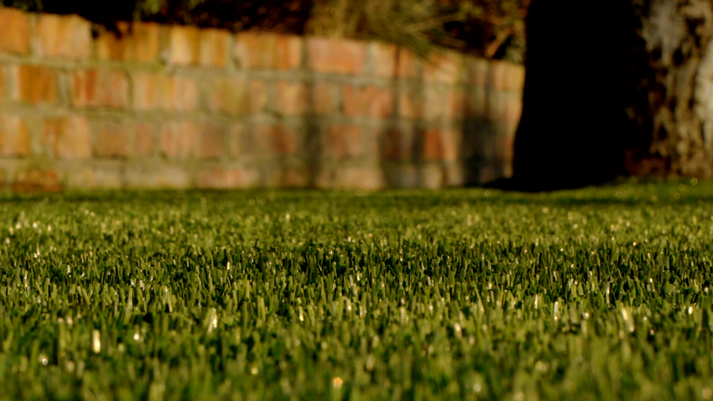 TigerTurf lawn and Tree