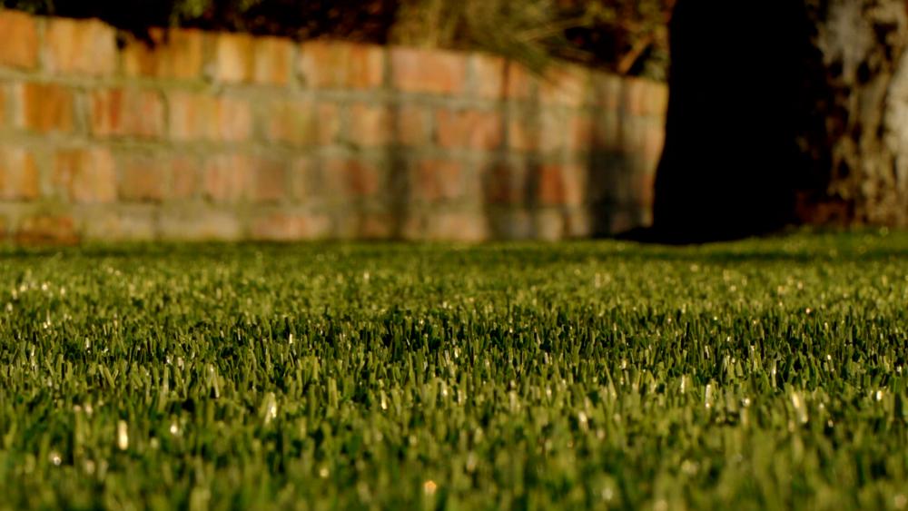 TigerTurf lawn and Tree