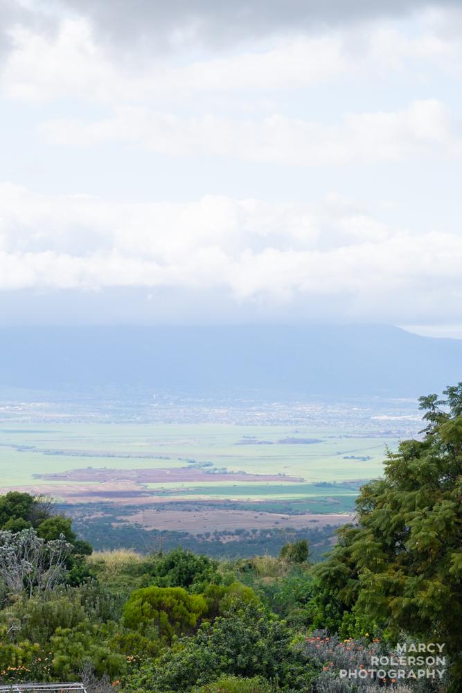 Malolo_Protea_Maui-3.jpg