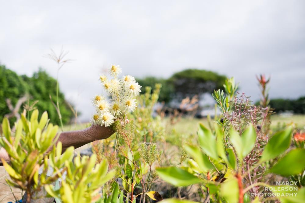 Malolo_Protea_Maui-63.jpg