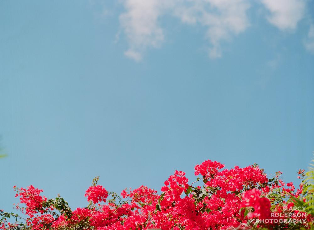 Hawaii_Maui_Paia-21.jpg