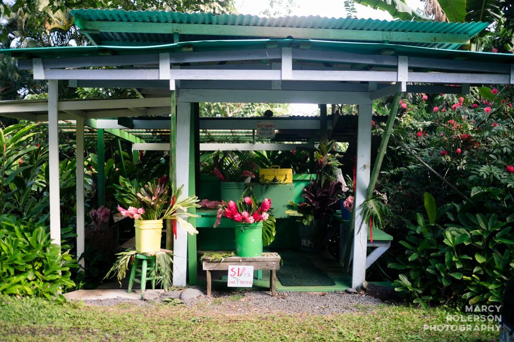 Hawaii_Maui_Paia-79.jpg