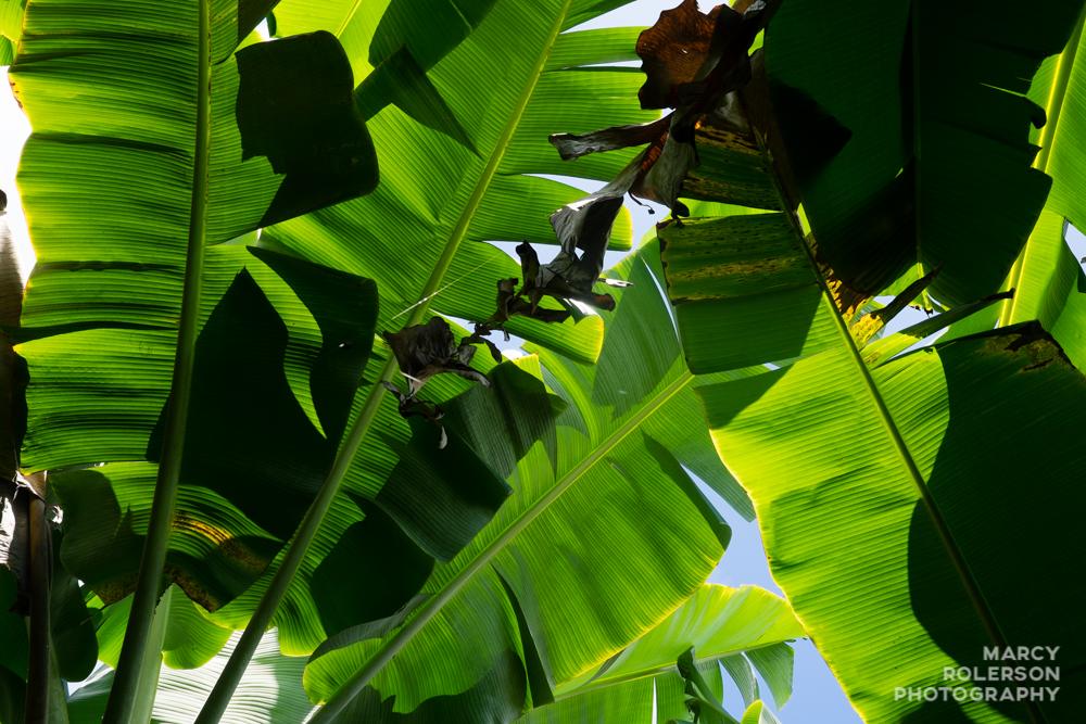Hawaii_Maui_Paia-97.jpg