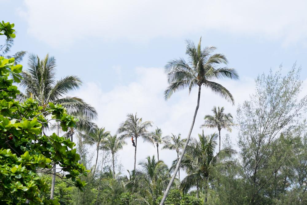Kauai_8.jpg